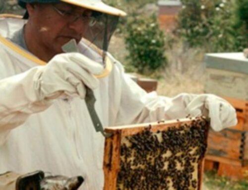 El PSOE pide en las Cortes ayudas directas a los apicultores profesionales, para paliar las pérdidas por las inclemencias meteorológicas